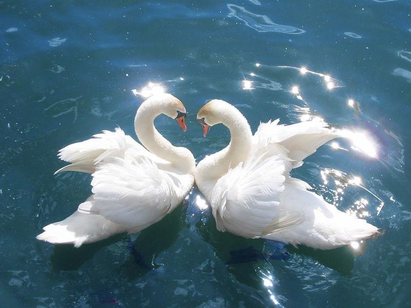 Peace, harmony and joy